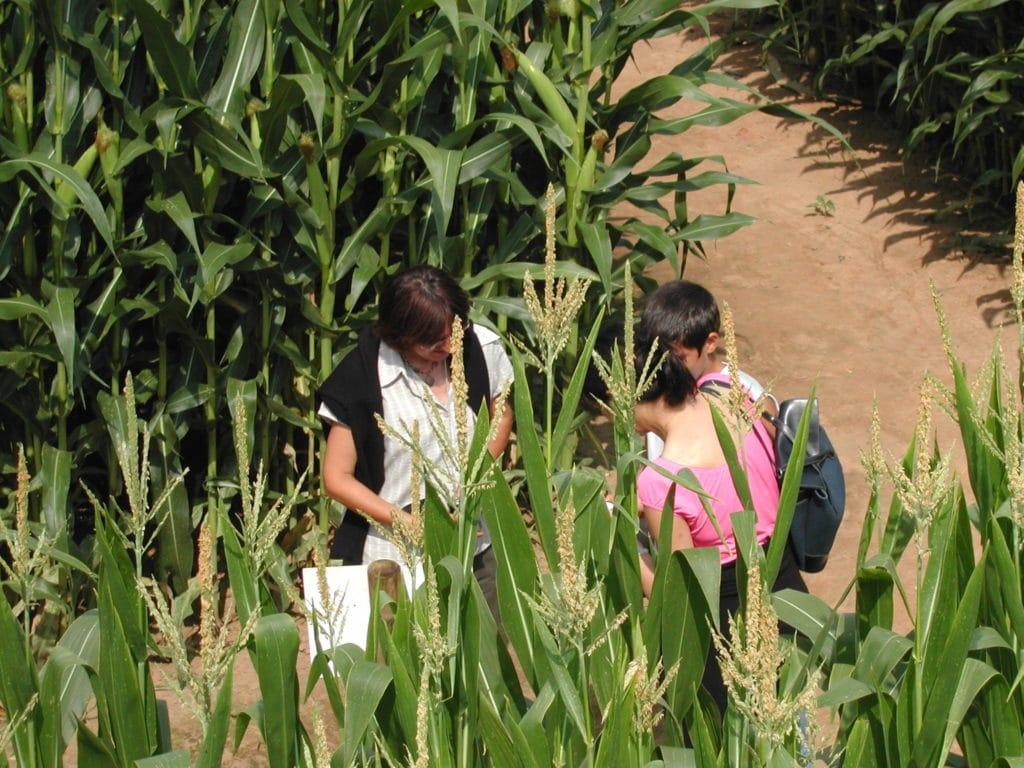 Labyrinthe de la ferme et le musée du pruneau